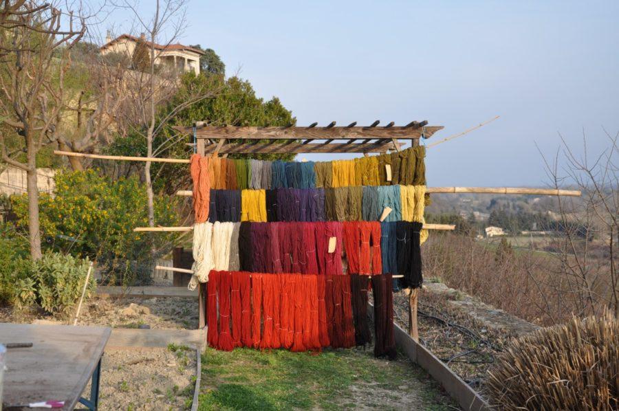 Lien | Couleur Garance : Jardin de plantes tinctoriales